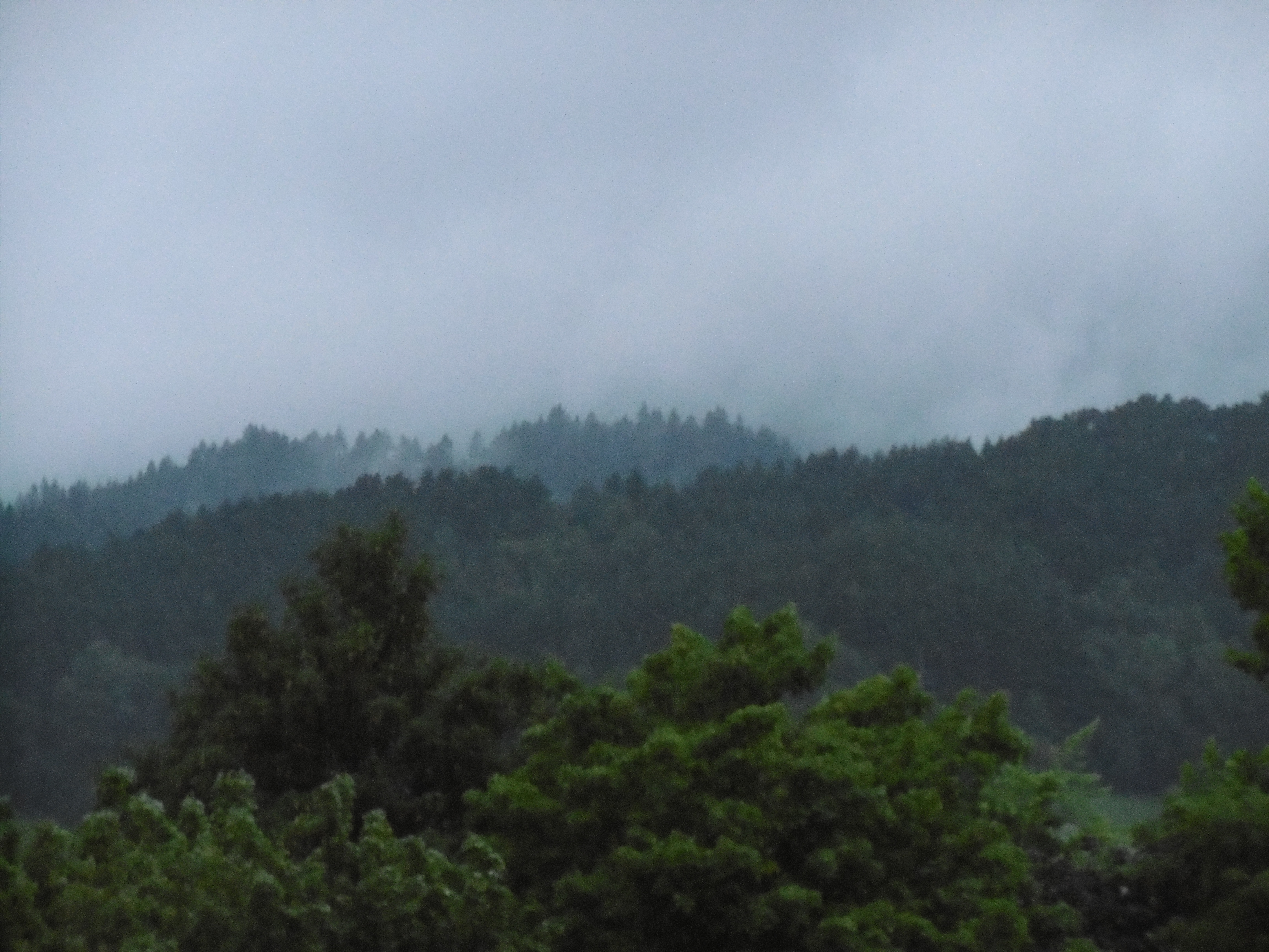 Photograph of a forest on hills disappearing into fog