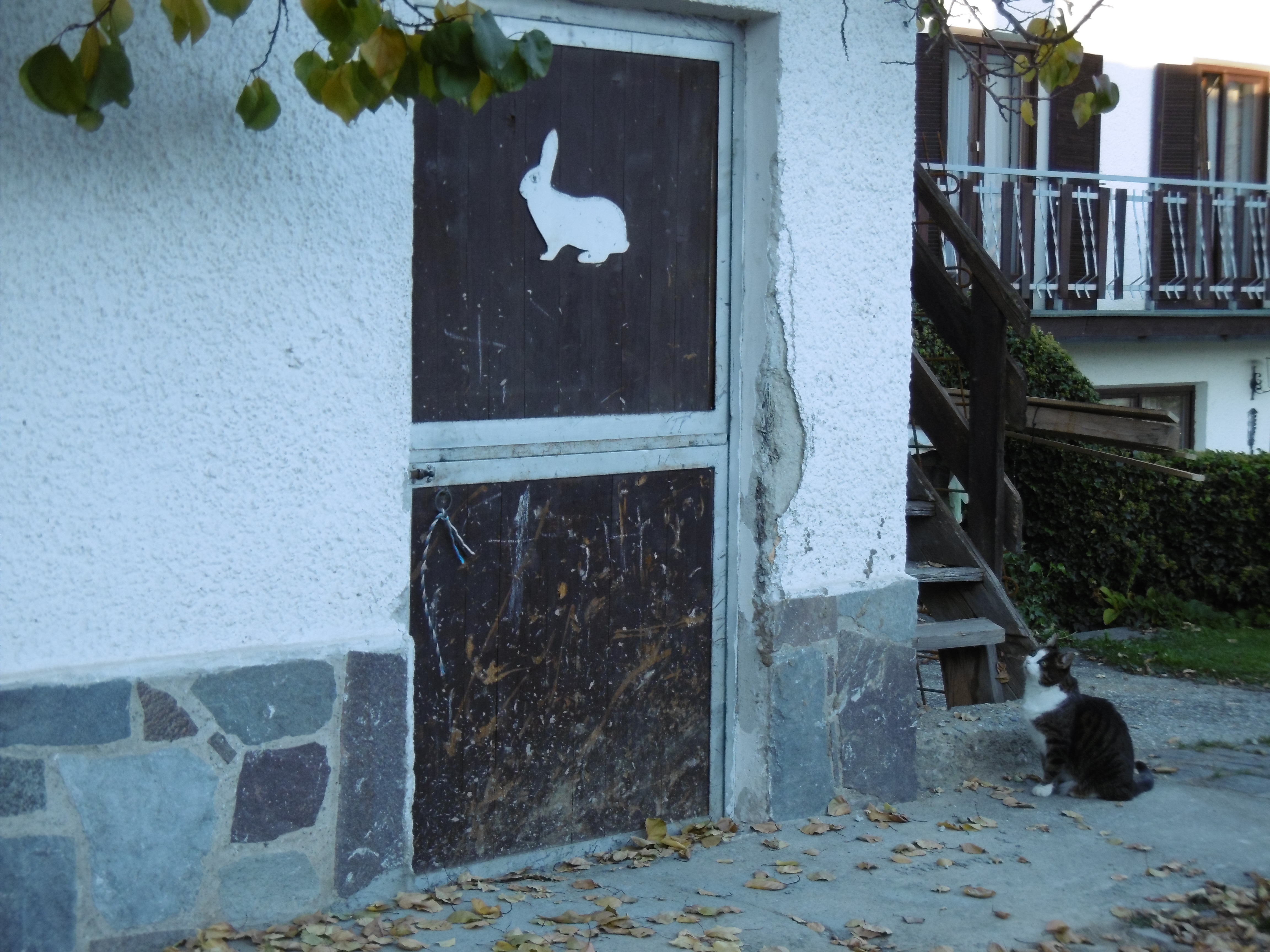 A photo of a tabbycat sitting on a pathway and staring at a closed door with a white rabbit painted on it