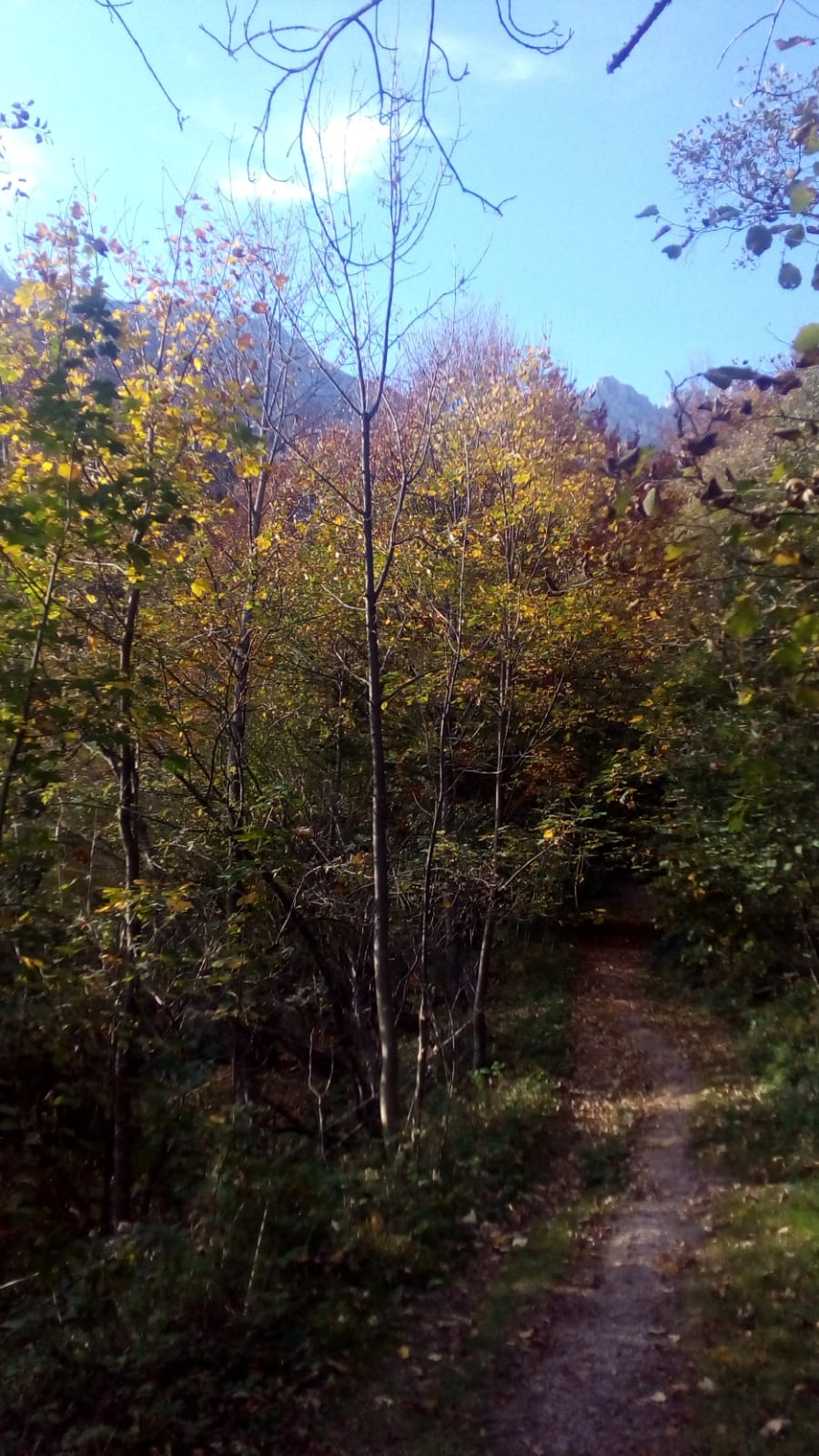 A narrow footpath through a forest of deciduous trees turning yellow