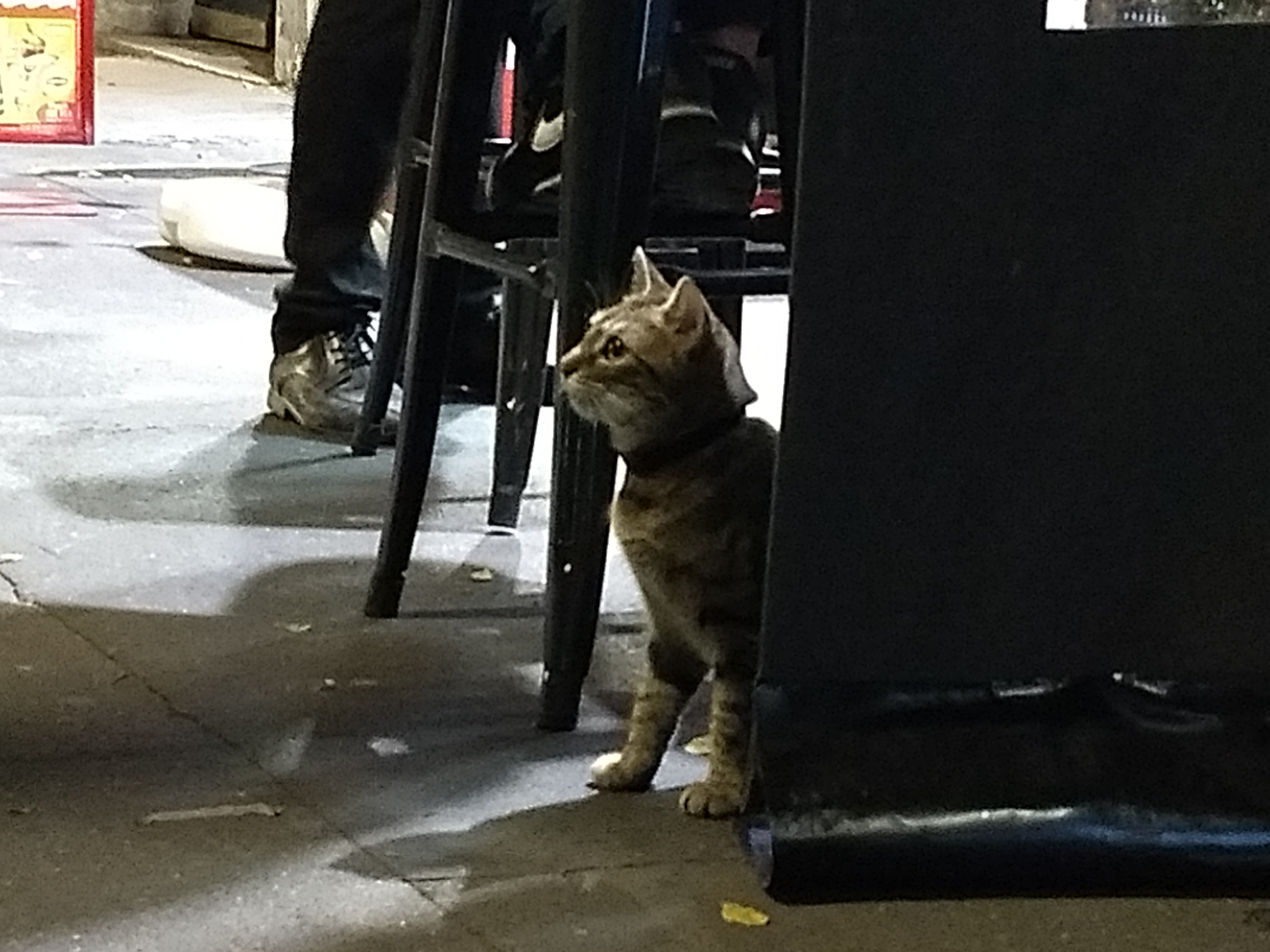 A tabby cat squatted on its hind legs underneath a chair on a concrete sidewalk
