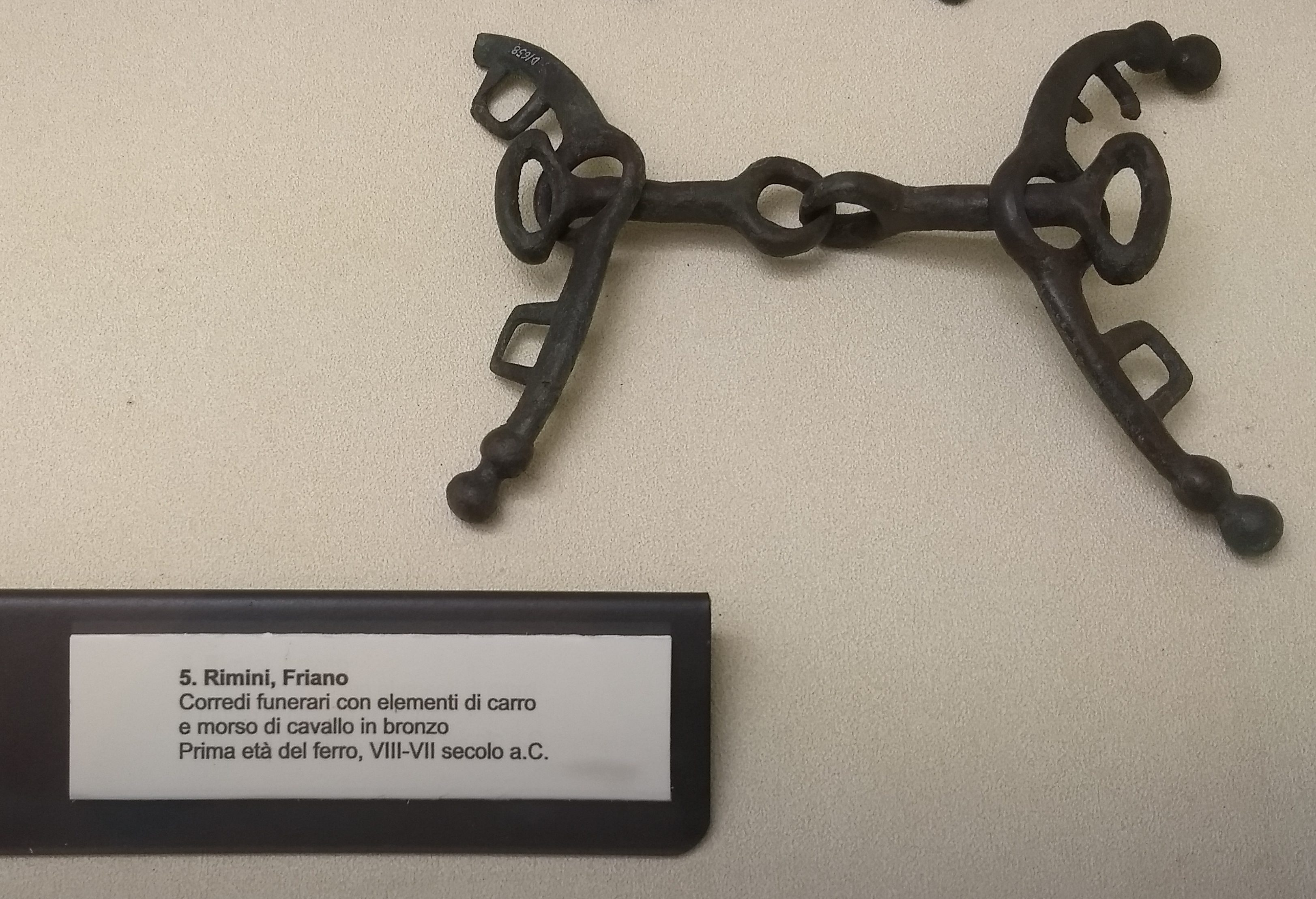 A four-part bronze horse bit, aggressively cleaned and patinad, in a museum display case